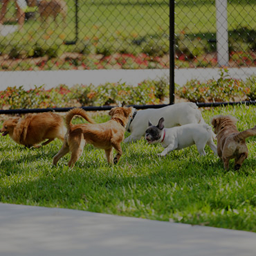 Large Dog Park at Mountain Shadows Apartments